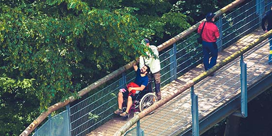 Hainich National Park: Treetop trail