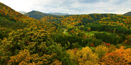Wine Route - autumn in Erlenbach