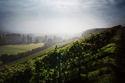 Franconian wine region