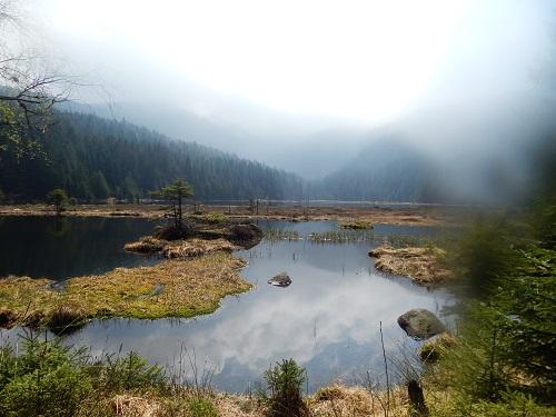 Bavarian Forest Nature Park: Lake Arber