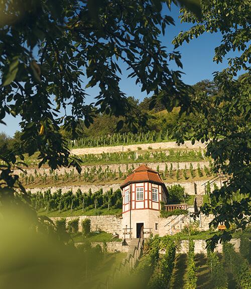 Tourisme : des idées pour voyager en Allemagne Freyburg_Weinberge_im_Weinanbaugebiet_Saale_Unstrut
